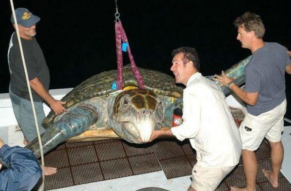 Больша-а-а-я черепаха!