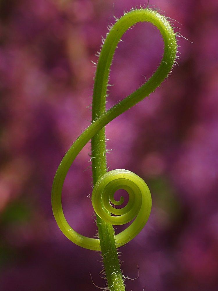 музыка природы картинки детские