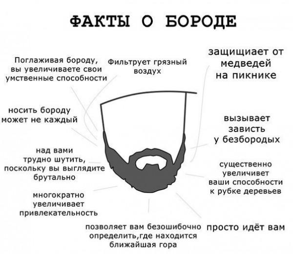 Факты о бороде