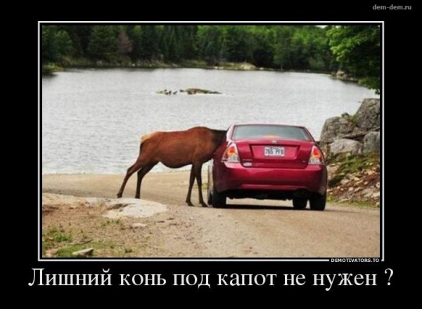 Лишний конь не нужен?