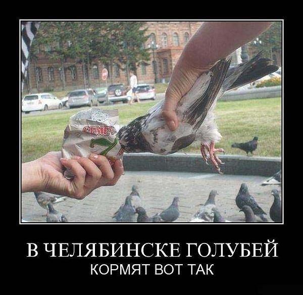 Так в Челябинске кормят голубей