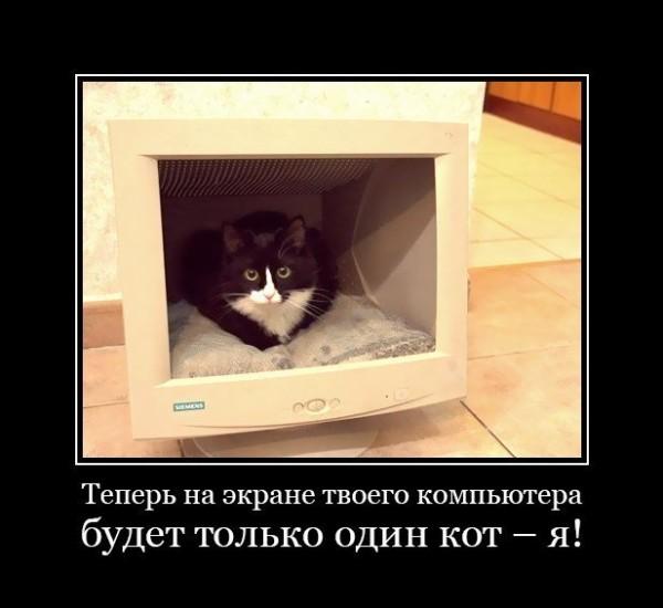 Кот в телевизоре