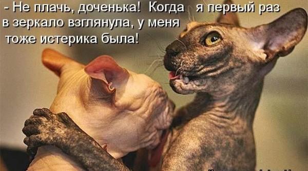 Не плачь, доченька