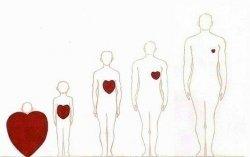 Эволюция сердца