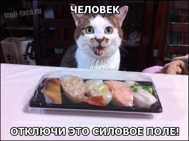 Кот и красная рыба