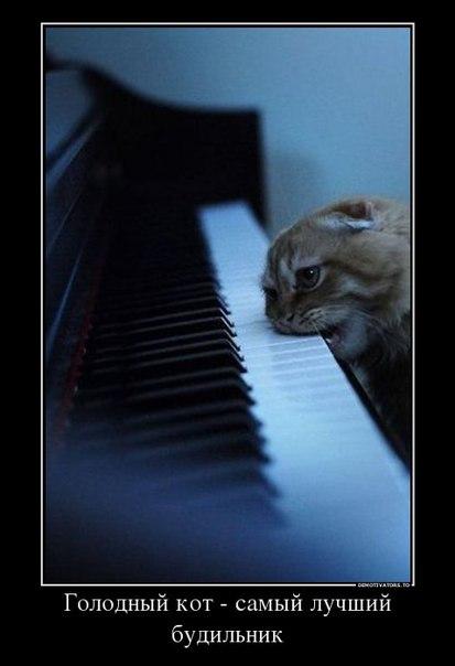 Котенька хочет кушать :)