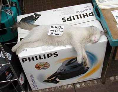 Кот на гарантии