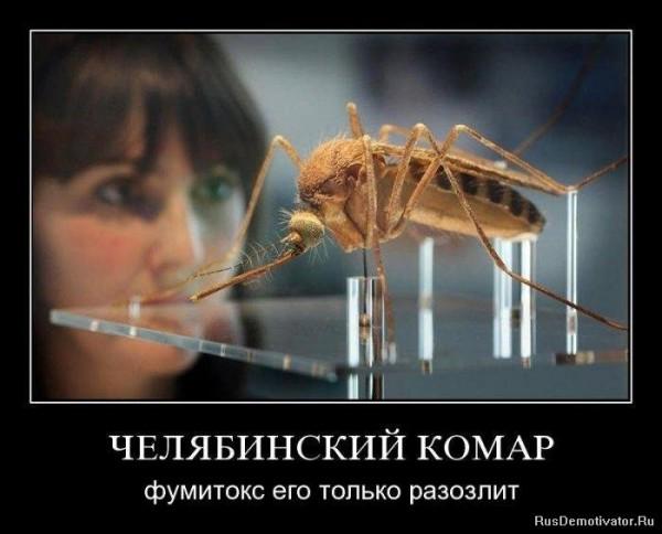 Челябинский комар