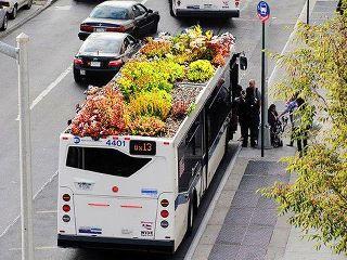 Автобусо-сад