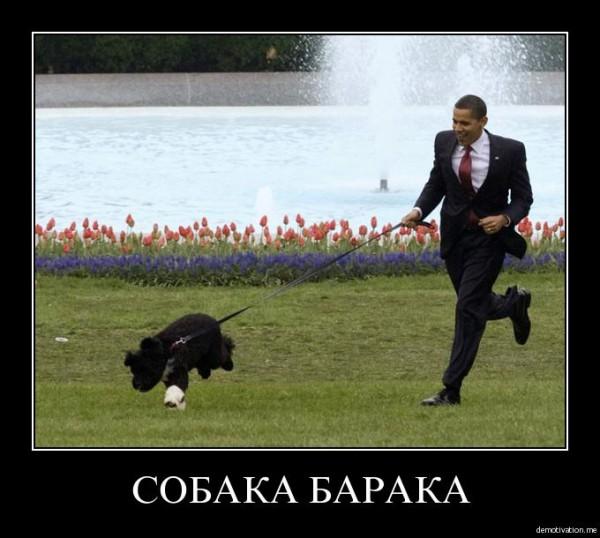 Собака Барака