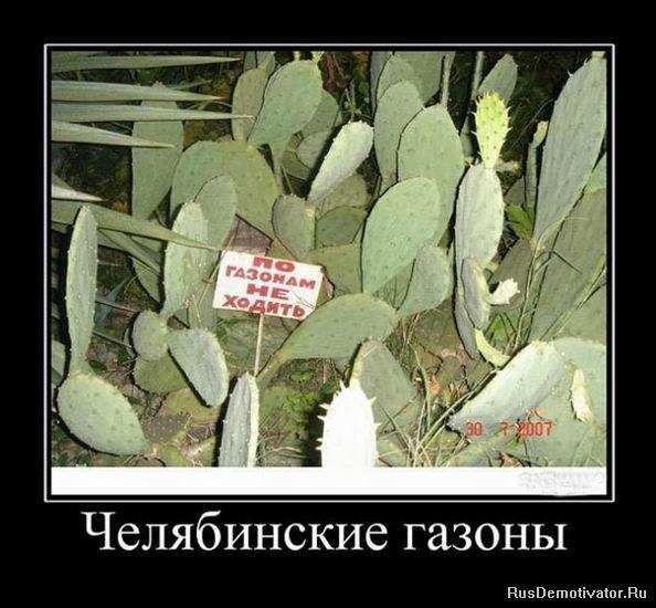 Челябинские газоны