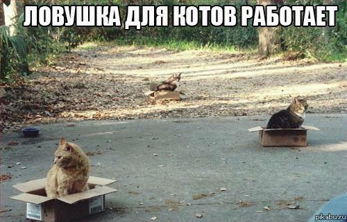 Ловушка для котов работает