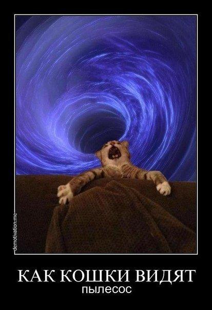 Как кошки видят пылесос