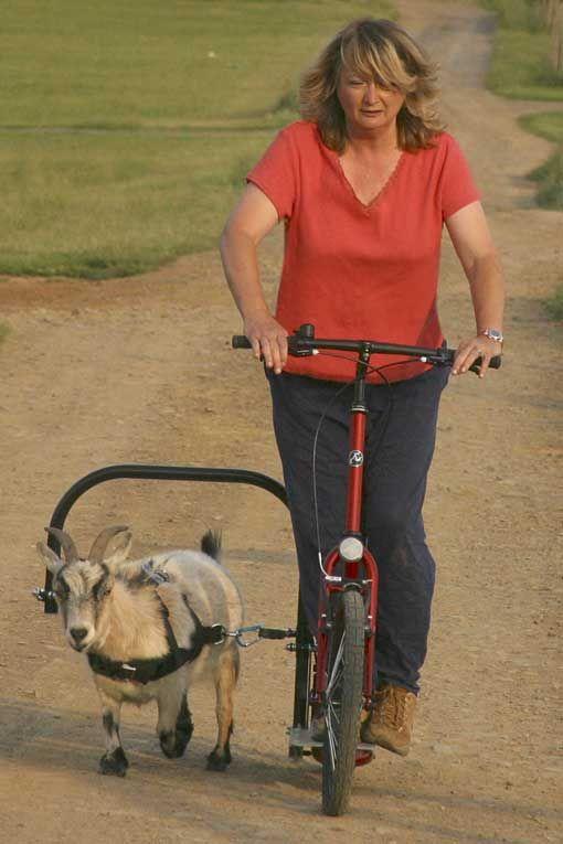 Лисапед с коляской