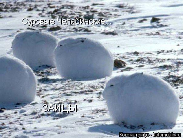 Челябинские зайцы