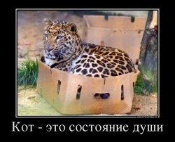 Кот - это состояние души